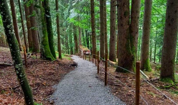Wanderweg 30 - durch den Wald