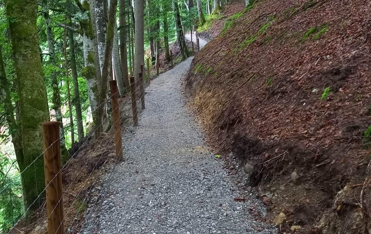 Neuer Waldweg zum Parkplatz
