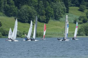 Cat Regatta