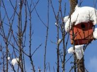 Winternest_CasaClaudia