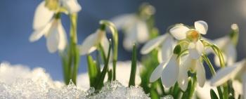 Frühlingsduft