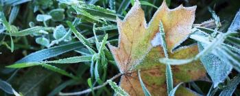 Herbstgeflüster Mitte