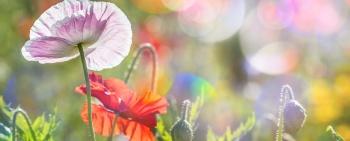 Sommerbrise Mitte – Ferienwohnungen Casatina Oberstdorf