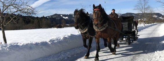 Pferdekutsche-winter