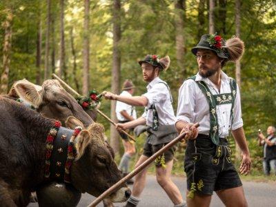 Viehscheid - Die Hirten treiben die Tiere von den Alpen
