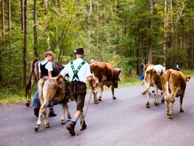 Viehscheid - Auf dem Weg richtung Scheidplatz