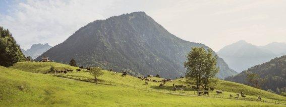 14.09. Kühe Moorweiher-005