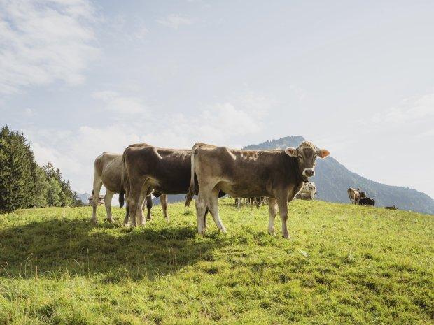 14.09. Kühe Moorweiher-006