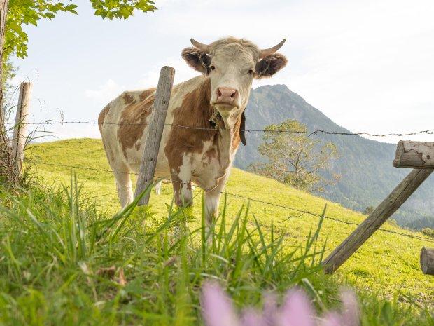 14.09. Kühe Moorweiher-024