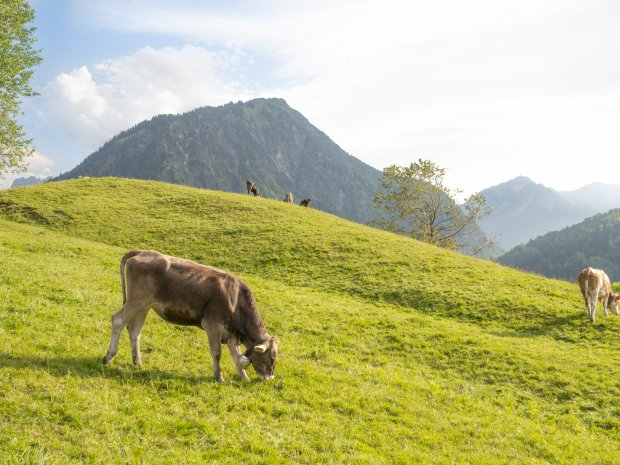 14.09. Kühe Moorweiher-025
