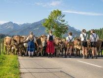 Viehscheid Schöllang und Rubi-033