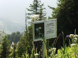 Alpenblumenlehrpfad