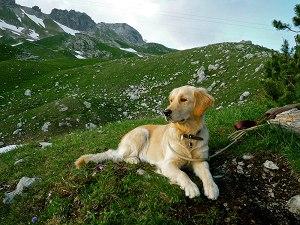 Hund am Nebelhorn