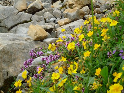Blumen am Ifen