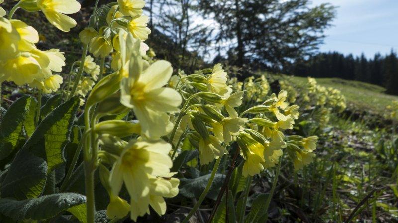 Gelbe blumen for Gelbe tafel