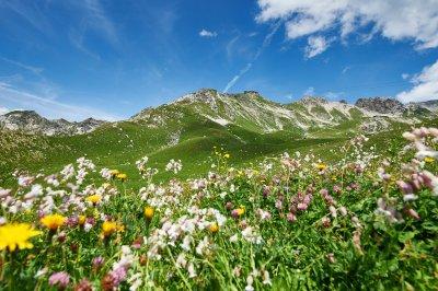 Alpenblumen am Nebelhorn
