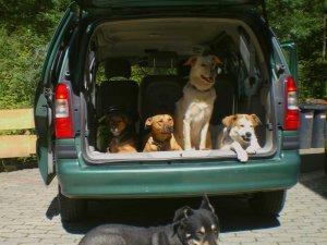 Wir kommen wieder... Urlaub mit Hund im Allgäu