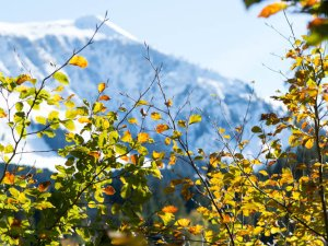 Goldener Oktober in Tiefenbach