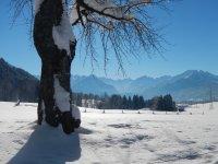 Winter-Wiese
