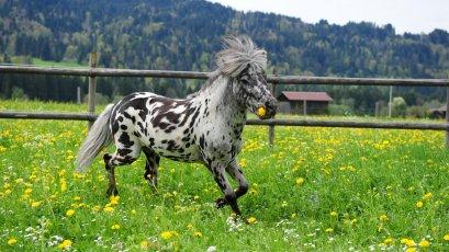 Glückliche Ponys