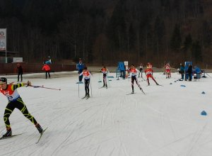 Austria Cup