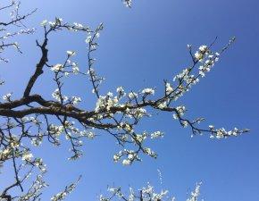Foto Blüte