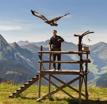 Eindrucksvolle Adler auf der Adlerbühne Ahorn im Zillertal