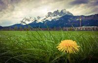 Frühling in den Kitzbüheler Alpen