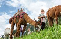 Lama-Trekking im Familienurlaub im Montafon
