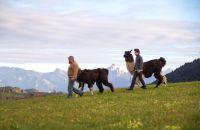 Lama-Trekking in Deinem Familienurlaub in Nesselwang