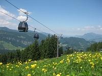 Trollblumen mit Ausblick am Söllereck