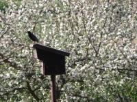 Star im Frühling vor unserem Haus