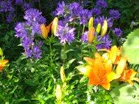 Mama Guckler's Gartenblumen