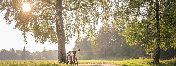 Radfahren im Grünen