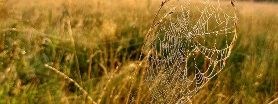 Spinnenetz mit Tau