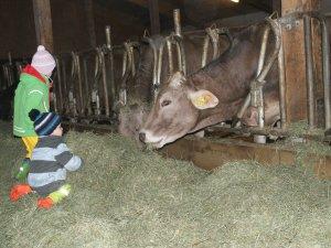 Kinder im Kuhstall