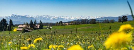 Frühling in Eschach
