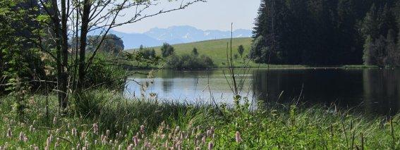 Schöner See in der Umgebung