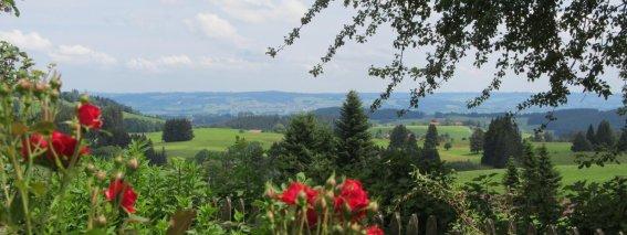 Sommer auf dem Ferienhof Maidel