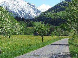 Unser Frühling - Weg südlich von Oberstdorf