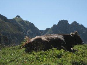 Alpwirtschaft in unserer Region