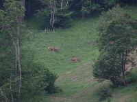Der Natur ganz nah: Hirsche in der Dämmerung am Hang hinter dem Haus