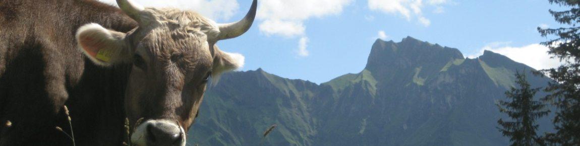Alpsommer in Oberstdorf