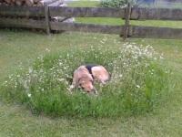 Unser Hund Jack im Garten