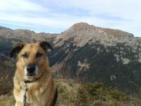 Jack in den Bergen