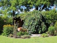 Garten August 2016 (3)