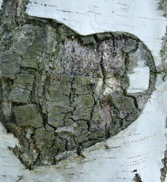Herz im Baum