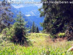Laut Wetterbericht wird sich die Spätlese am Heidelbeerkopf (der heißt wirklich so) mindestens bis Mitte November fortsetzen