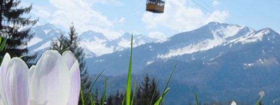 2016-04-12 wenn Krokuse blühen, naht das Ende der Skisaison