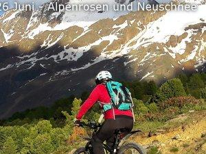 2018-06-26 Alpenrosen und Neuschnee